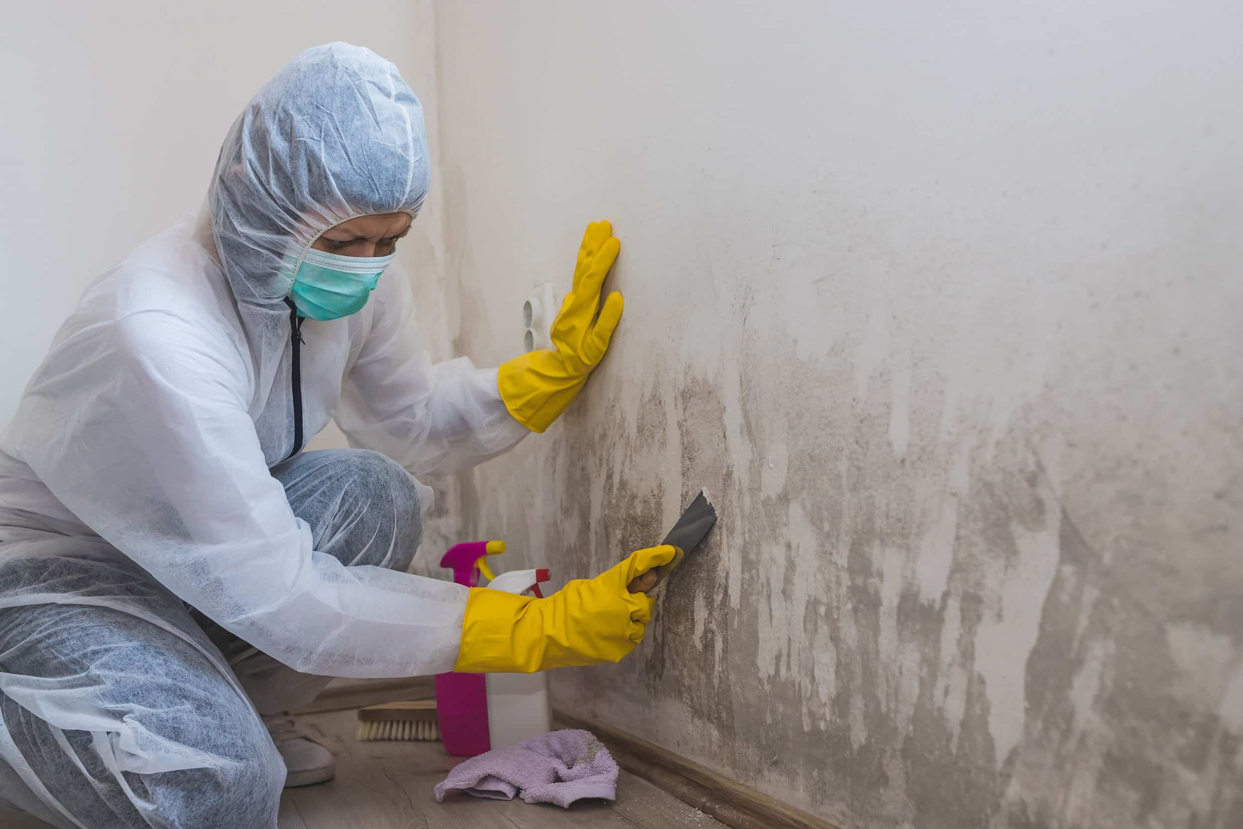 mold removal versus mold remediation