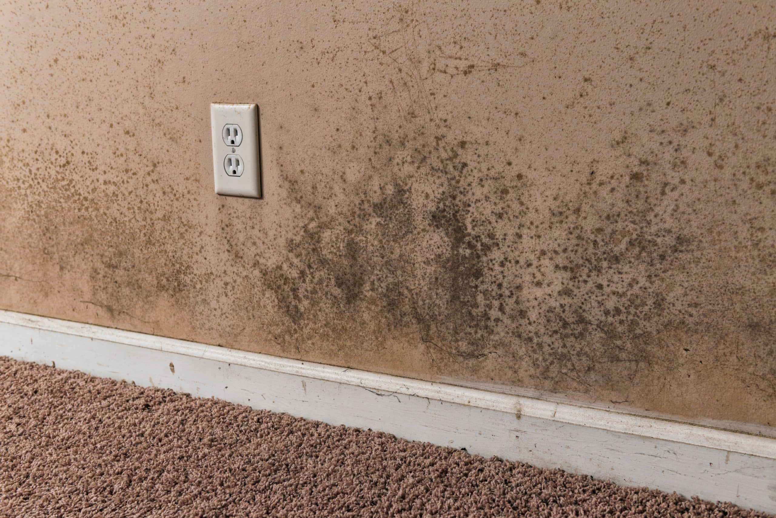 Mold Remediation TruClean Home Services